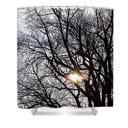 Shower Curtain featuring the photograph Tree With A Heart by James BO Insogna