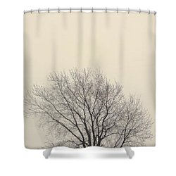 Tree#2 Shower Curtain by Susan Crossman Buscho