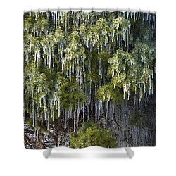 Shower Curtain featuring the photograph Treecicle by JD Grimes