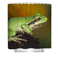 Treefrog On Rudbeckia Shower Curtain