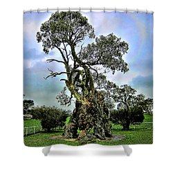 Treehouse Shower Curtain by Douglas Barnard