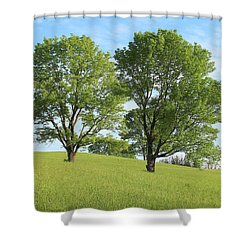 Summer Trees 4 Shower Curtain