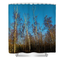 Trees And Blue Sky Shower Curtain