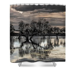 Trees Dream Shower Curtain