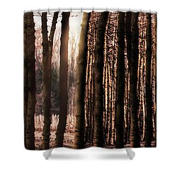 Trees Gathering Shower Curtain by Wim Lanclus