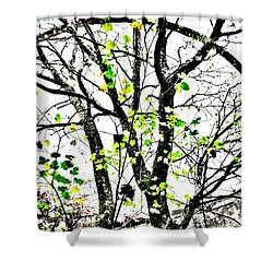 Trees Growing In Silo Abstract- Large Landscape Edition Shower Curtain