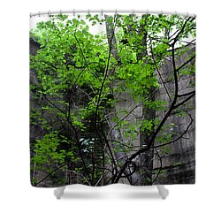 Trees Growing In Silo - Panorama Edition Shower Curtain