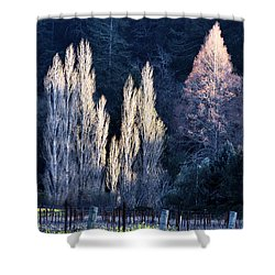 Trees In Fall Napa Valley Shower Curtain