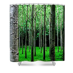 Trees In Rows Shower Curtain
