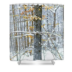 Trees In Snow Shower Curtain