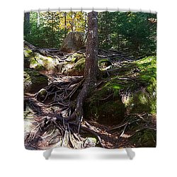 Trees - Mont Tremblant National Park Shower Curtain