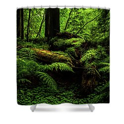 Shower Curtain featuring the photograph Trees Of Mystery by TL Mair