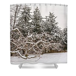 Trees Of Winter Shower Curtain