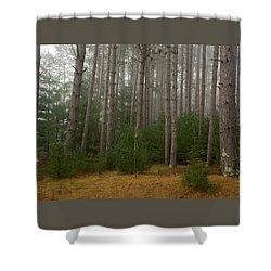 Shower Curtain featuring the photograph Trees On A Foggy Autumn Day 1 by Nancy De Flon