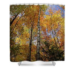 Trees On The Lincoln Woods Trail Shower Curtain by Nancy De Flon