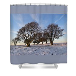 Trees On The Ring Shower Curtain by Hazy Apple