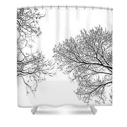 Shower Curtain featuring the photograph Trees Reaching by Marilyn Hunt