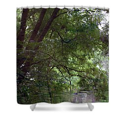 Trees Reflected In A Woodland Stream 2867 H_2 Shower Curtain