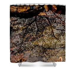 Shower Curtain featuring the photograph Tree's Reflection by Iris Greenwell