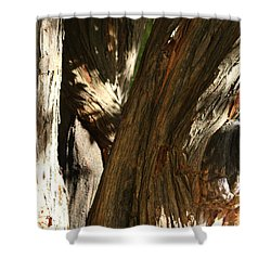 Trees Trunks Shower Curtain