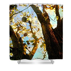 Shower Curtain featuring the digital art Treetop Abstract-look Up A Tree by Shelli Fitzpatrick