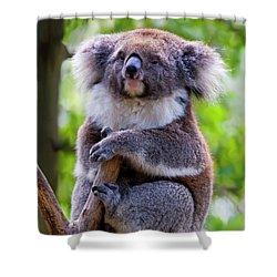 Treetop Koala Shower Curtain by Mike  Dawson