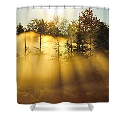 Treetop Shadows Shower Curtain