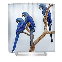 Tres Amigos  Shower Curtain