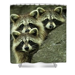 Tres Banditos Shower Curtain by Mircea Costina Photography