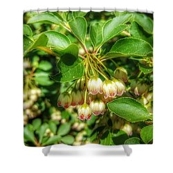 Tres Belle Shower Curtain by Isabella F Abbie Shores FRSA