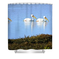 Shower Curtain featuring the photograph Tres Pelicanos Blancos by AJ Schibig