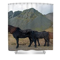 Shower Curtain featuring the photograph Tri - Color Icelandic Horses by Dubi Roman