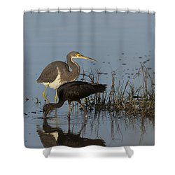 Tri-colored Heron And Glossy Ibis Shower Curtain