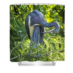 Shower Curtain featuring the photograph Tri-colored Heron Grooming by Paula Porterfield-Izzo