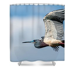 Tri-colored Heron In Flight Shower Curtain