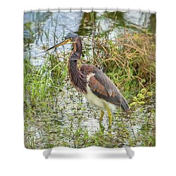 Tri-colored Heron Shower Curtain