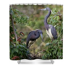 Tri-colored Herons On The Nest Shower Curtain by Myrna Bradshaw
