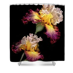 Tricolor Iris Pair Shower Curtain by Dave Mills
