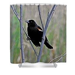 Tricolored Blackbird Shower Curtain
