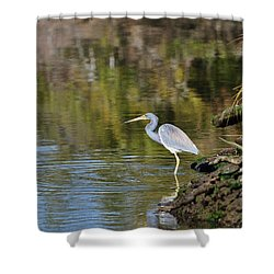 Tricolored Heron Fishing Shower Curtain by Al Powell Photography USA