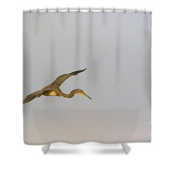 Tricolored Heron In Flight Shower Curtain by Louise Heusinkveld