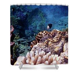 Tridacna Squamosa  Shower Curtain
