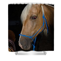 Trigger Ancestry Line Shower Curtain by Donna Brown