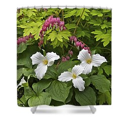 Trillium And Bleeding Hearts1079 Shower Curtain