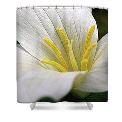 Trillium Grandiflorum Shower Curtain by Angie Rea
