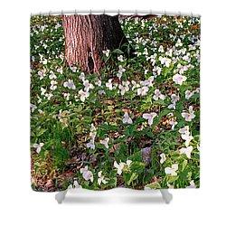 Trillium Woods No. 1 Shower Curtain