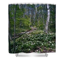 Trillium Woods No. 2 Shower Curtain