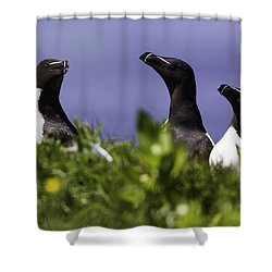 Trio Shower Curtain by Marie Elise Mathieu