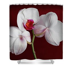Trio Of Orchids Shower Curtain