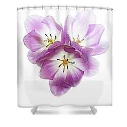 Shower Curtain featuring the photograph Trio Squared by Rebecca Cozart